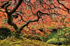 Autumn Magnificence - Marmont Hill
