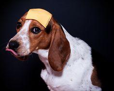 DogsWearing beautifull Hat