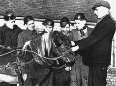 ponies in the coal mines   still in service the last pony robbie retired in 1999