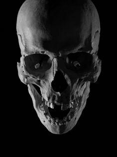 Skull Skull Reference, Drawing Reference, Crane, Pinstriping, Cartoon Design, Skull And Bones, Skull Art, Skeletons, Sketches