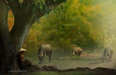 shepherd by iD's - Photo 94412587 / 500px