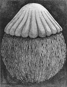 peter randall page drawings