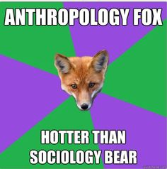 Anthro Major Fox: Sociology Bear