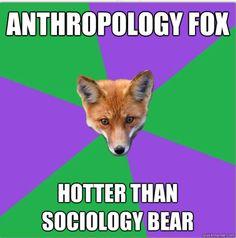 Anthro Major Fox: Sociology Bear