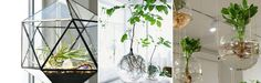 planten als cadeau inpakken - Google zoeken