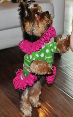 Dog Clothes PDF Sewing Pattern - Small Dog Fleece Sweater S205 - 5 Sizes, 2 Styles Included. $6.00, via Etsy.