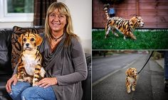 Animal lover makes her pet dog look like a TIGER