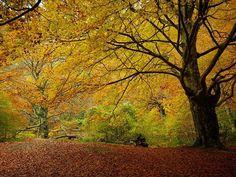 El otoño en #Navarra, en el Nacedero del Urederra, en la mirada de @santimb