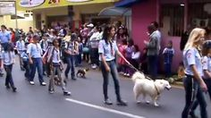Grupo Escoteiro Iguaçu 43º SC - Desfile 07.09.10