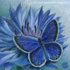 """BLUE from """"Camouflage (Primary Colors)"""" Series by CaryeVDPMahoney • #art #butterfly #cornflower #flower #nature"""