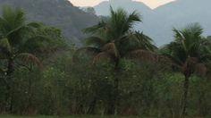 Famiglia Libardoni: Encontro Xerém, RJ, Brasil. Pombos 03. IMG_8575. 614...