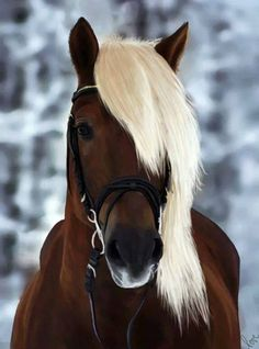 Blondie is a very sassy horse but loves to hang out with Baelfire (Augusts horse)-Caden