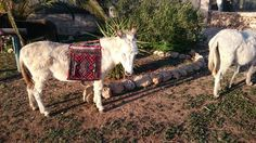 Hab ich nicht eine schöne neue Tasche für unsere Eselwanderungen ☺?