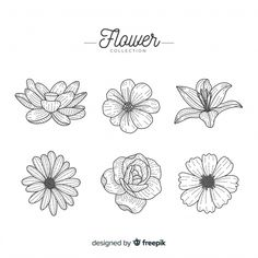 Colección flores dibujada a mano vector ... | Free Vector #Freepik #freevector #flor #floral #flores #agua