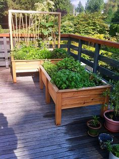 Balcony garden - raised, shallow bed with vertical frame for trellis