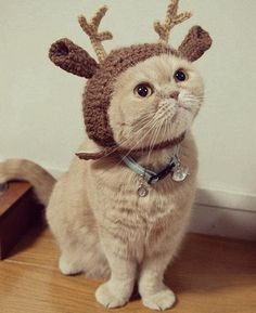 And the twentieth cat of Christmas!! | Community Post: The 20 Cats Of Christmas