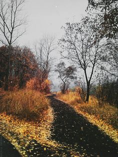 ***Pathway in autumn (no location given) by Natalia Drepina cr.nw.