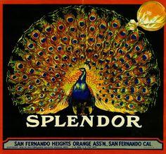 Splendor Brand - San Fernando, California