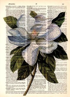 Flores con fondo de papel de periódico | Imprimolandia | Bloglovin' Book Page Art, Book Art, Newspaper Art, Dictionary Art, Vintage Art Prints, Painted Books, Gcse Art, Art Sketchbook, Digital Illustration