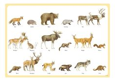 Swedish animals
