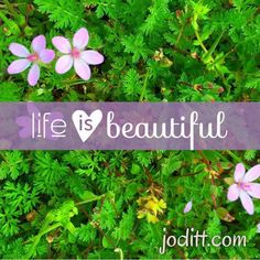 Life is beautiful. When you take the time to notice. What beauty have you noticed lately?