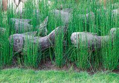 african garden idea Garden Art, Garden Ideas, Home And Garden, South African Flowers, Planting, Gardening, Water Wise, Be Natural, Ornamental Grasses
