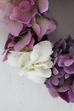 hortensia en couronne