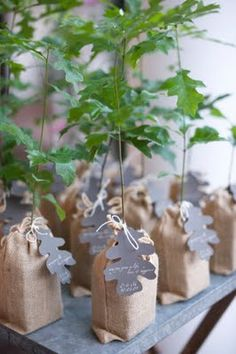 one of the most cherished/everlasting gifts oak tree seedlings as favors Wedding Favors And Gifts, Wedding Favor Boxes, Party Favor Tags, Party Favors, Tree Seedlings, Budget Bride, Party Guests, Wedding Designs, Wedding Ideas