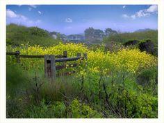 Country Fence by StarlitGardens.deviantart.com on @DeviantArt