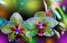 Orchids: flower power?