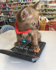 Learning to use a calculator ♡