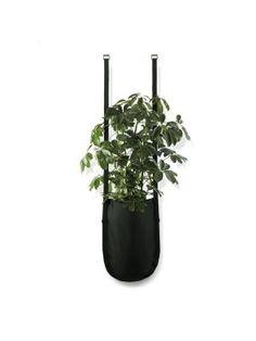 Urban Garden planttas