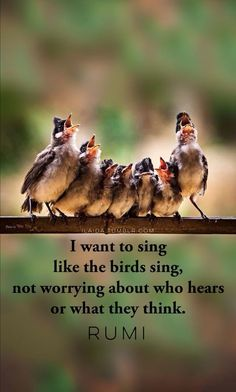 rumi quotes – I want to sing like the birds sing, not worrying about who hears. - rumi quotes – I want to sing like the birds sing, not worrying about who hears or what they think - # Rumi Love Quotes, Bird Quotes, Sufi Quotes, Nature Quotes, Qoutes, Quotes About Birds, Allah Quotes, Cat Quotes, Spiritual Quotes