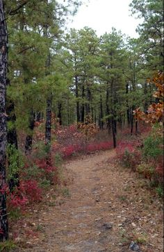 Pine Barrens  My backyard for many years in New Jersey.