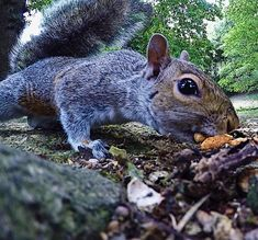 Second step to mastering the GoPro. Squirrels, Gopro, Wildlife, Landscape, Animals, Chipmunks, Animales, Scenery, Animaux