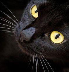 Lindo gato preto