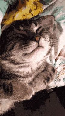 Is this cat dreaming of knitting a sweater? GIF