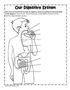 Digestive System for Kids Worksheets Practicum 2 Lesson