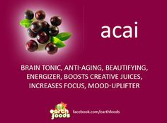 ACAI BERRY | Healing power of plants and Earth foods. Raw food, juicing, recipes, natural, healing, & remedies.