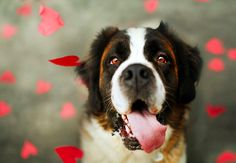 'Does Your Dog Know You Love Them?' - Good read for dog owners