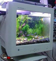 computer fish tank? whats he thinking about!!