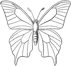 Butterfly coloring paper/clipart