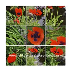 Poppy Photo Bundle  by Collection Picture Frames on @creativemarket