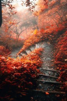 森の中の霧 : Photo