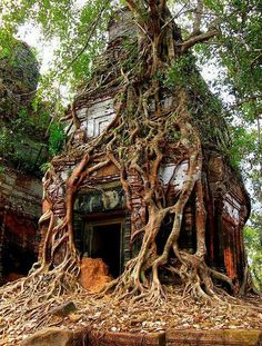 Koh Ker Tower Tree, Cambodia In the ancient city of Koh Ker, trees toppled giant stone pillars, vines crept over carved floral decorations, and moss covered everything. #travel