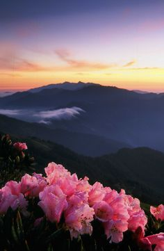 Mountain In Taiwan(the flower in the early morning)