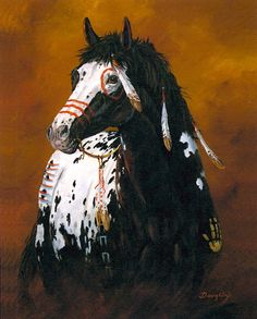 Striking Appaloosa Painted Indian War Pony With Feathers.