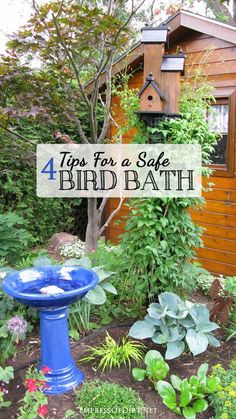 Bath Safety Tips for Happy Healthy Birds Did you know birds can drown in bird baths? Make sure yours is safe and helps keep the birds healthy!Did you know birds can drown in bird baths? Make sure yours is safe and helps keep the birds healthy! Bird Bath Garden, Diy Bird Bath, Garden Birds, Garden Hose, Garden Crafts, Garden Projects, Funny Bird, Bird House Kits, Bird Aviary