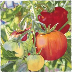 """Ripe"" watercolor tomatoes painting by artist Cara Brown. Watercolor Fruit, Watercolor And Ink, Watercolor Flowers, Watercolor Paintings, Art Paintings, Botanical Art, Botanical Illustration, Vegetable Painting, Fruit Painting"