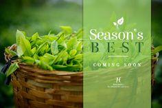 Second flush coming up real soon ! Enjoy the Season's Best.  World's Freshest Tea for you, right here: https://www.halmaritea.com/teas/